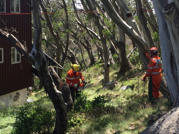 SES training in tree clearing 600