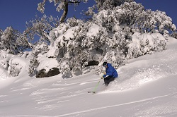 perisher freshies